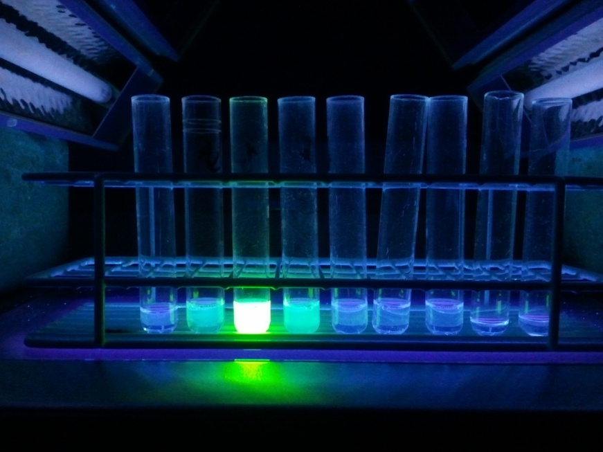 Purification of a GFP-tagged protein