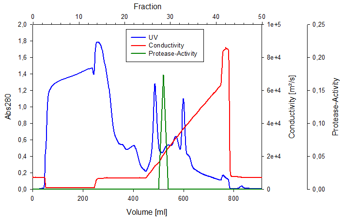 Purification of the enzyme of interest is achieved by chromatography. In this case a protease has been purified using anion exchange chromatography